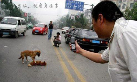 Witnesses were touched that even an ordinary dog can be so loyal !